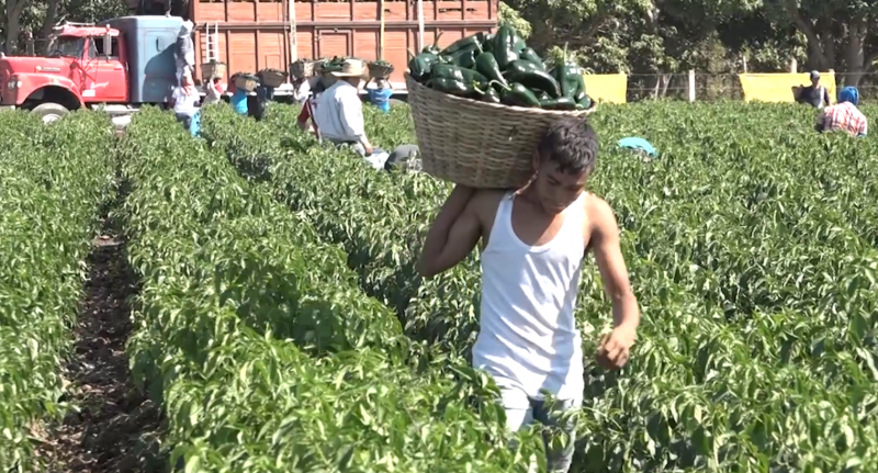 Aranceles podrían traer afectaciones a Sinaloa: Lizárraga Mercado