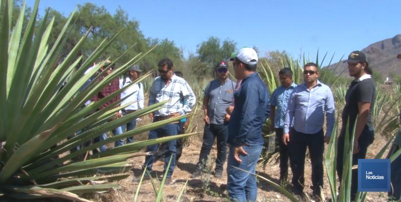 Imparten curso taller sobre plantaciones comerciales de maguey