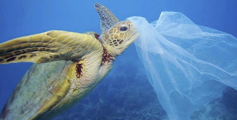 Imágenes impactantes que muestran el daño producido por el plástico a la vida marina