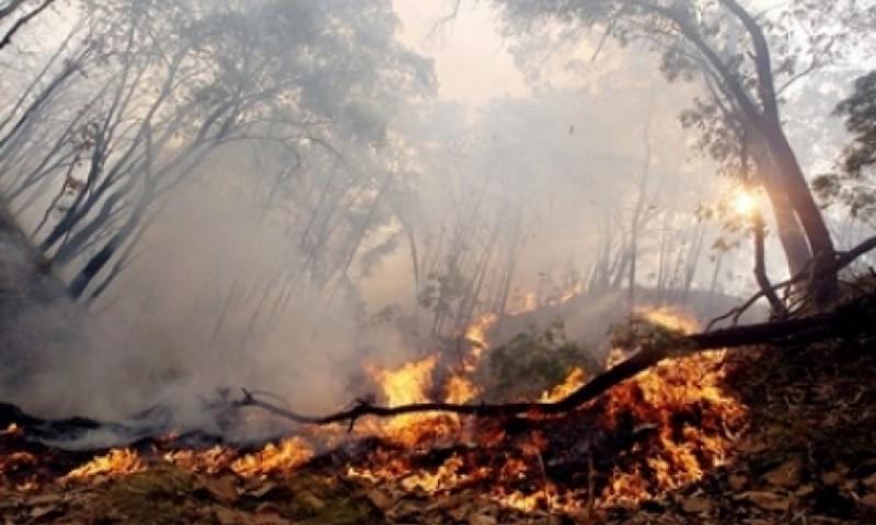 Disminuyen los incendios forestales durante el 2019