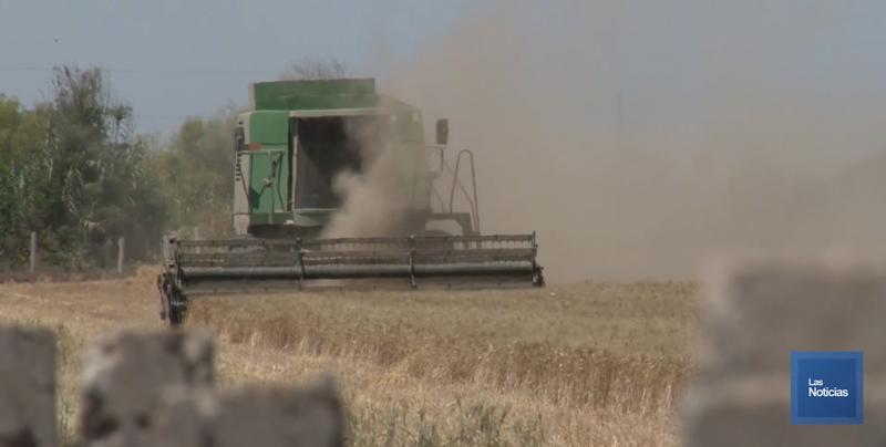 Productores agrícolas insisten en el pago del complemento al ingreso objetivo