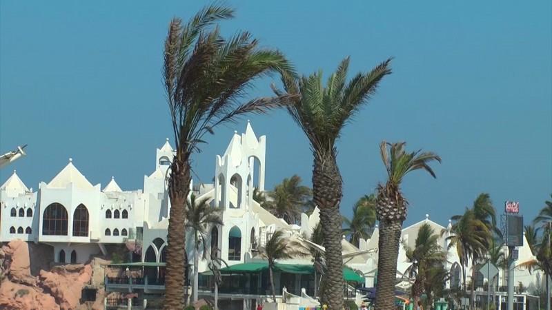 En Mazatlán las palmeras podrían desaparecer