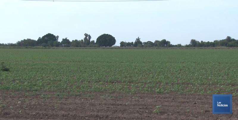 Ante la falta de cultivos de verano, se avizora un panorama difícil en la región
