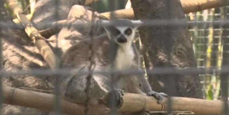 24 de junio inician los cursos de verano en el zoológico de Culiacán
