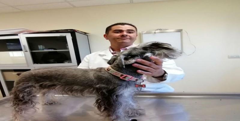 Calor también afecta a las mascotas