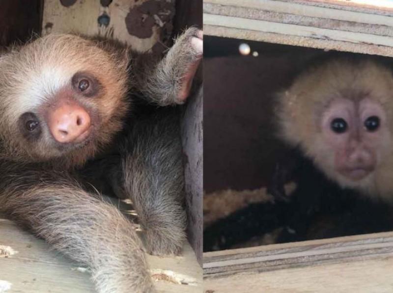 Sin responsables tras sacrificio de fauna exótica