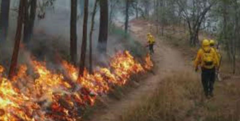 Sinaloa tiene probabilidades altas de incendios forestales