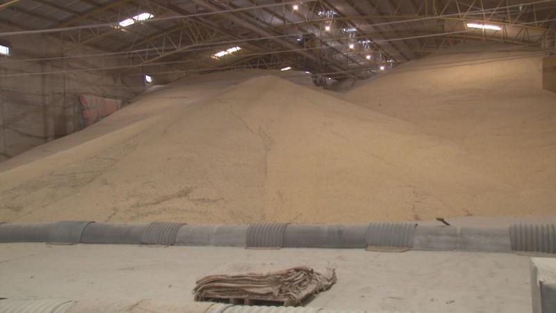 Denuncian que bodegas del sector social no están recibiendo contratos para la compra de maíz