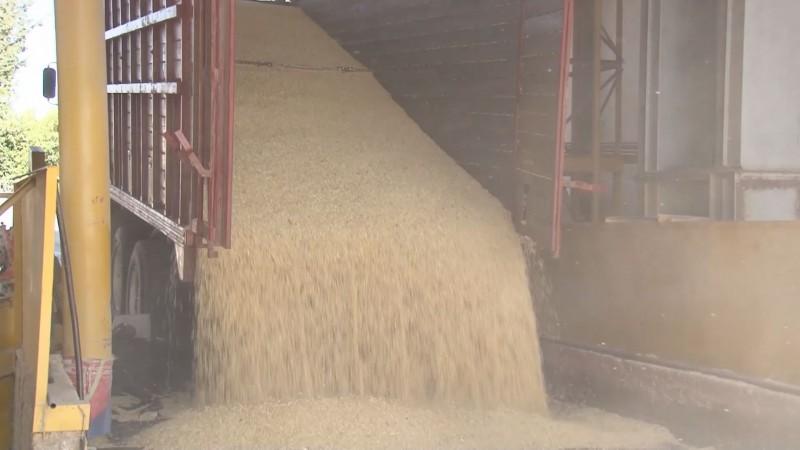 Realizarán productores de maíz una manifestación este jueves en la delegación de SADER