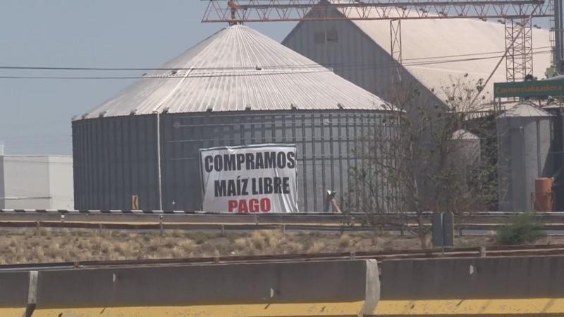 """Diconsa compró maíz por la """"libre"""" afectando el precio y las contrataciones"""
