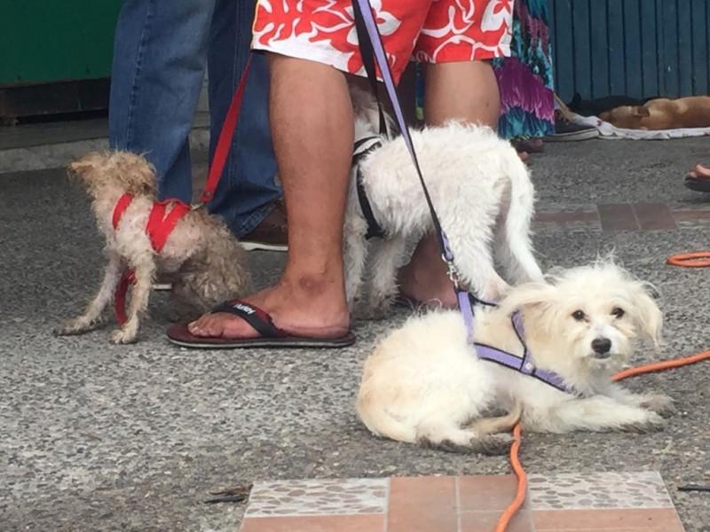 Necesario proteger a mascotas en temporada de calor: Vectores