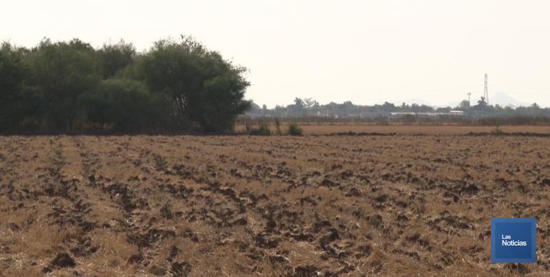 Panorama sombrío en terrenos de cultivo en el Valle del Yaqui