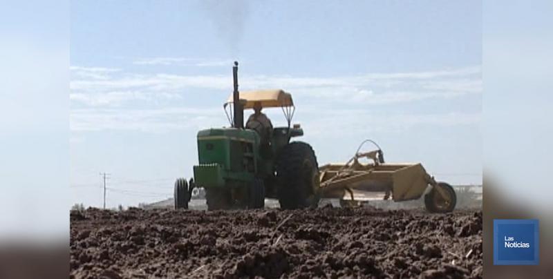 Sanidad Vegetal exhorta realizar labores a productores para evitar maleza