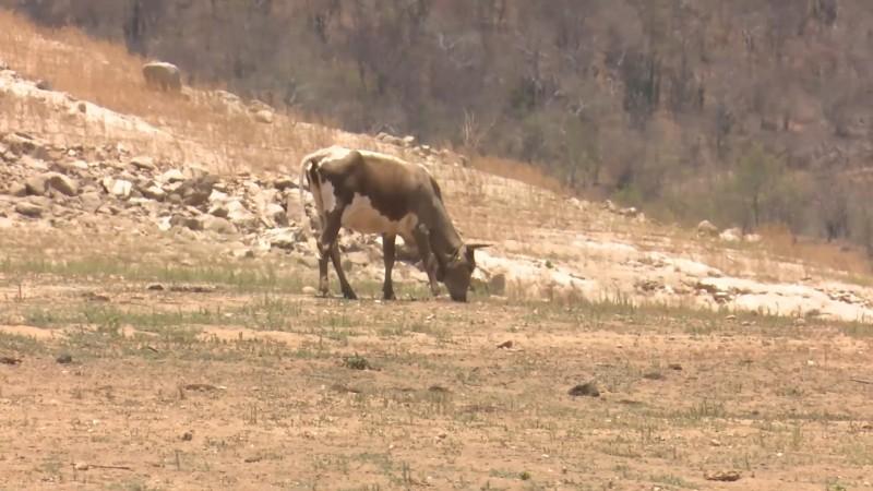 Clima ha sido benévolo con ganaderos