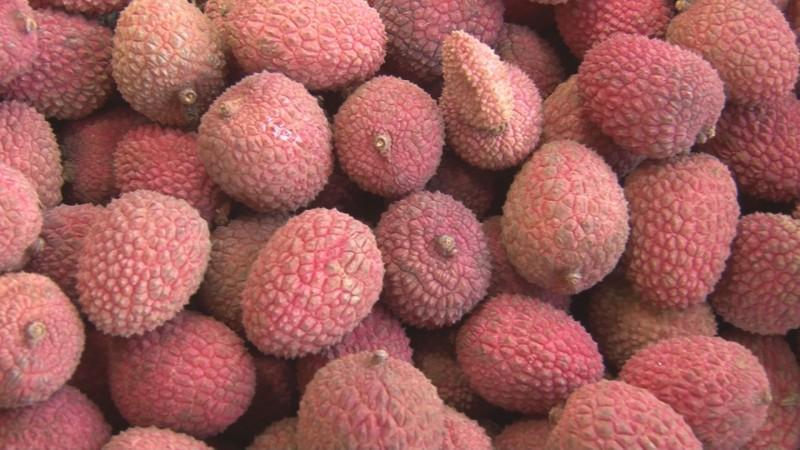 El consumo excesivo de Lichis puede provocar hipoglucemia en personas con niveles bajos de azúcar en la sangre