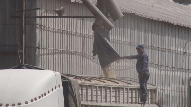 Confianza de que se contraten los 5.7 millones de toneladas de maíz de Sinaloa