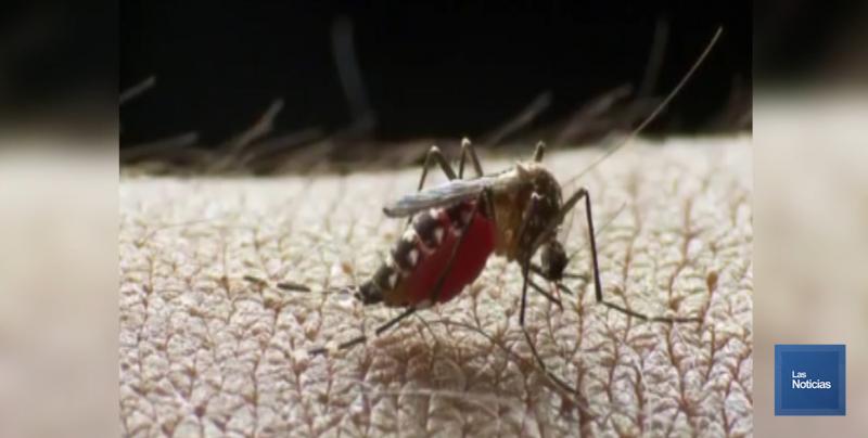 Todo el año combaten al mosco Aedes Aegyti