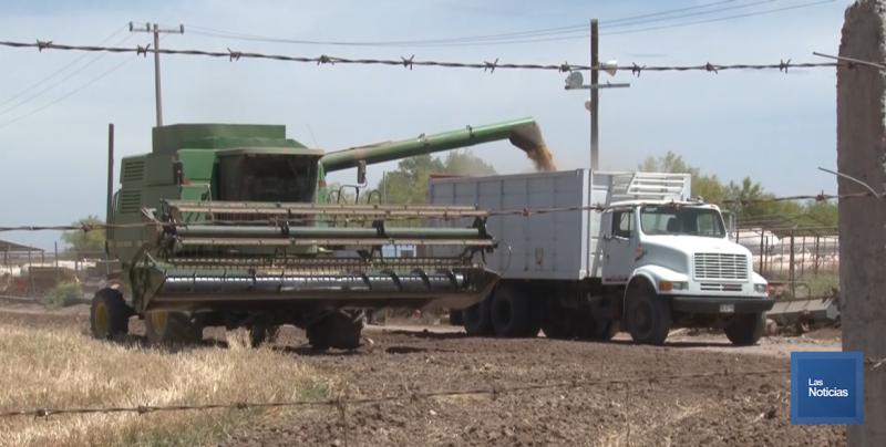 Piden productores agrícolas acelerar el pago del complemento