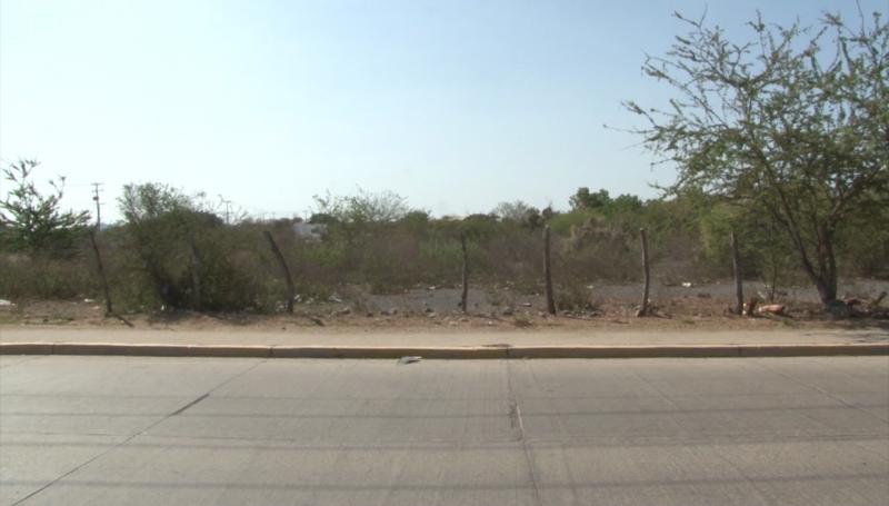 En extinción las áreas verdes en Mazatlán