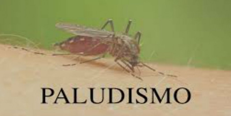 Sinaloa no baja la guardia contra el paludismo