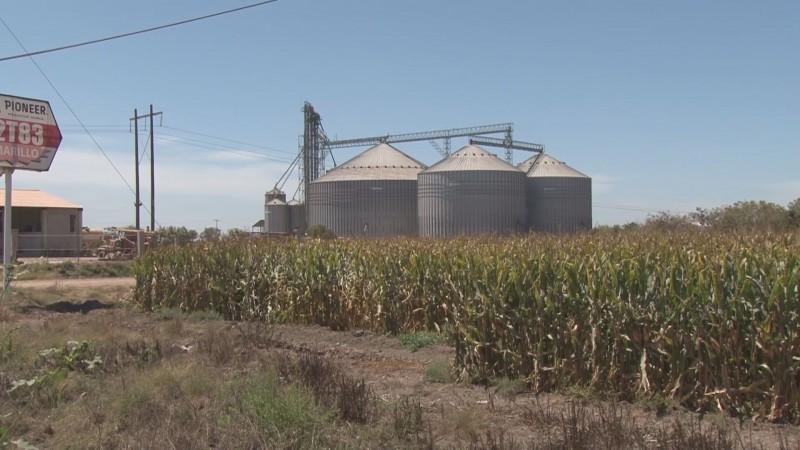 ASERCA revisará deducciones que hagan las bodegas a los productores agrícolas