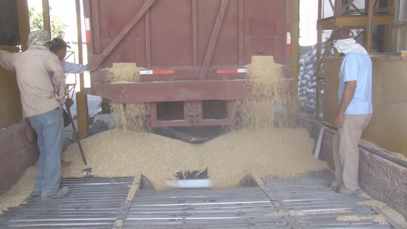 Se dió un gran paso con la contratación del 5.5 millones de toneladas de maíz
