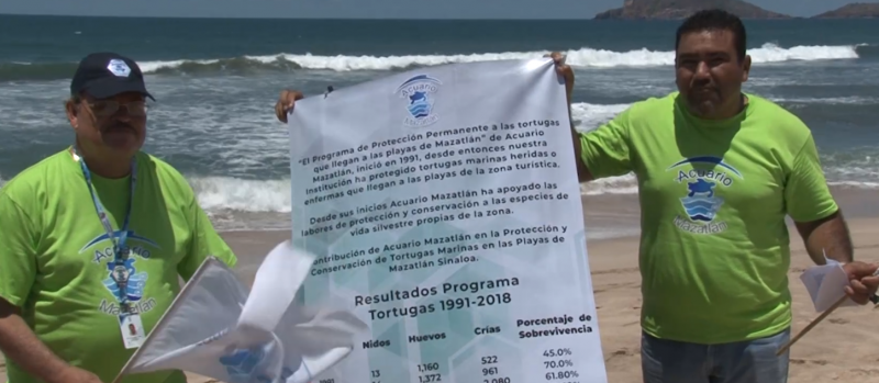 Dan banderazo de inicio a 29 temporada de Programa de Protección a la Tortuga Marina