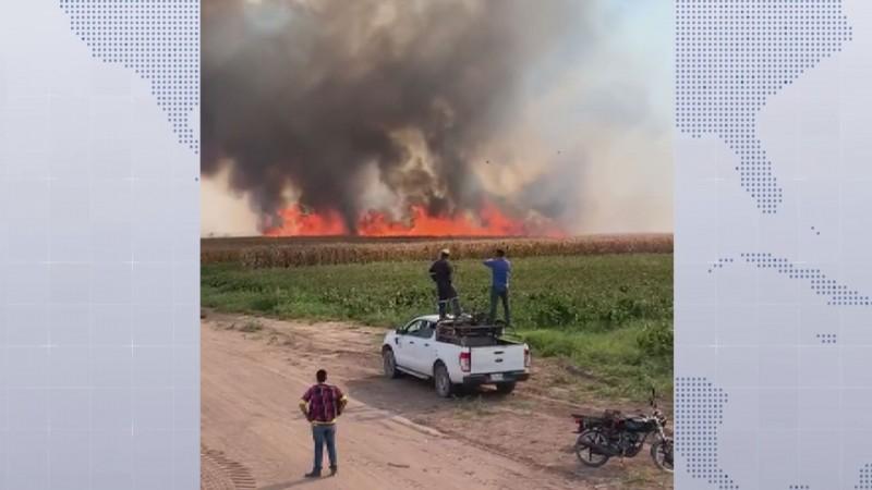 No están funcionando los comités municipales contra la quema de socas, no aplican sanciones