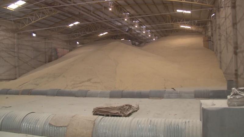 El maíz no contratado en la cosecha de Sinaloa , también vale 4 mil 150 pesos: Emilio González