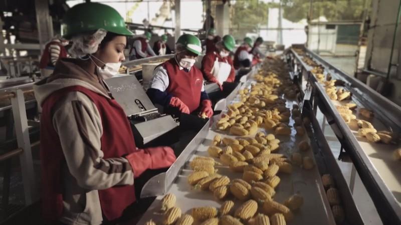 Busca Sinaloa seguir continuar con mayor generación de empleos