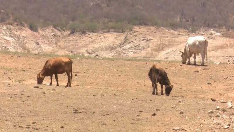 Siguen problemas para productores por saturación de bodegas
