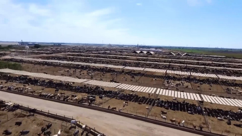 Sector pecuario con altos niveles de exportación