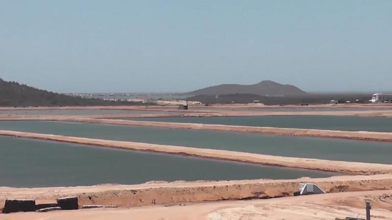 Piden acuacultores frenar la importación de camarón de Centroamérica