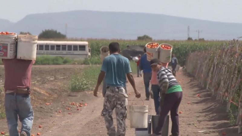 Detectan mano de obra infantil en campos agrícolas del sur de Sinaloa