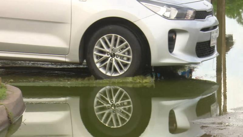 Brotan aguas verdes en Cedros
