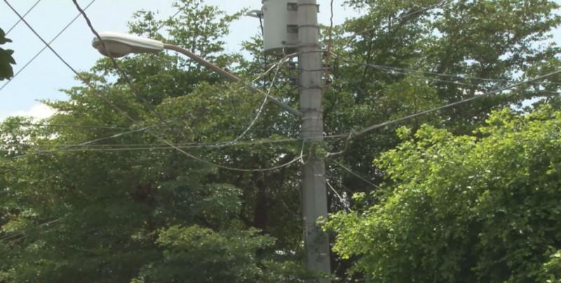 Árboles ya tocan cables de luz en San Benito