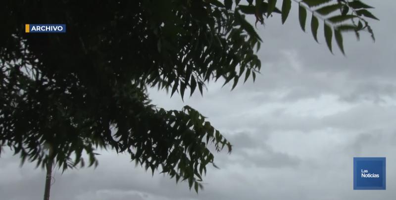 Árboles y un anuncio luminoso caído, dejó la lluvia de este lunes