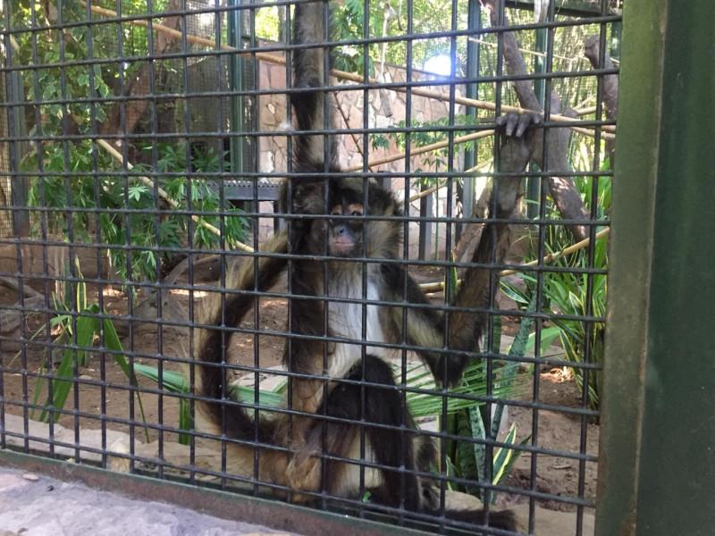 Llegan dos nuevos integrantes al zoológico recatados de trafico ilegal