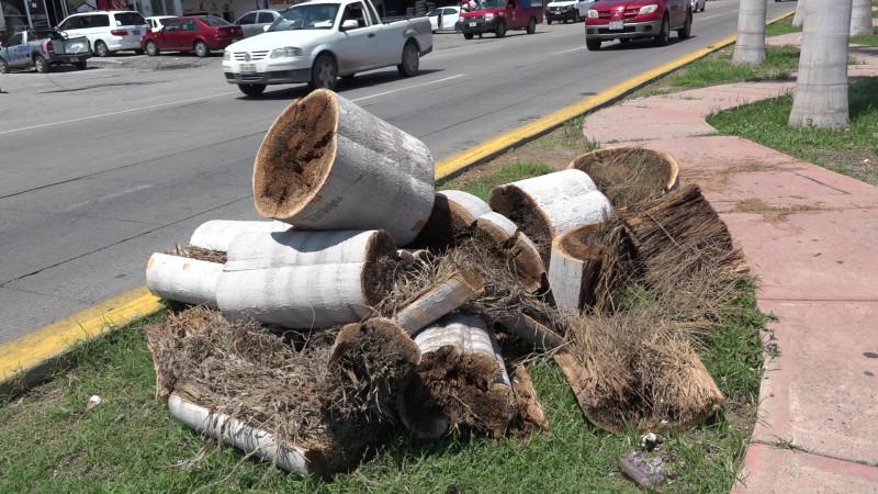 Servicios Públicos municipales, detrás de la tala de palmeras en la Rafael Buelna
