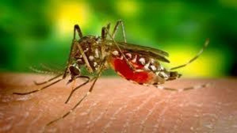 4 casos de paludismo en Sinaloa