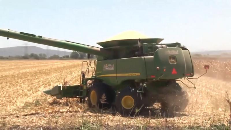 Producción agrícola marcha por buen camino