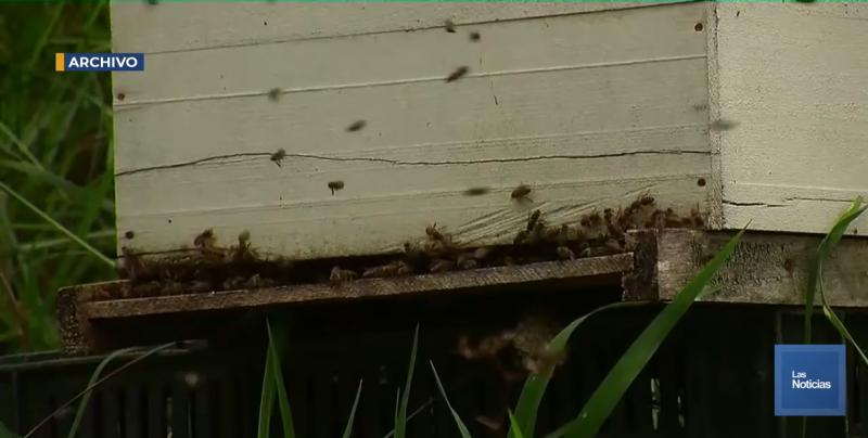 Por el coyotaje, hay detenidos 300 barriles de miel: Representante de Apicultores