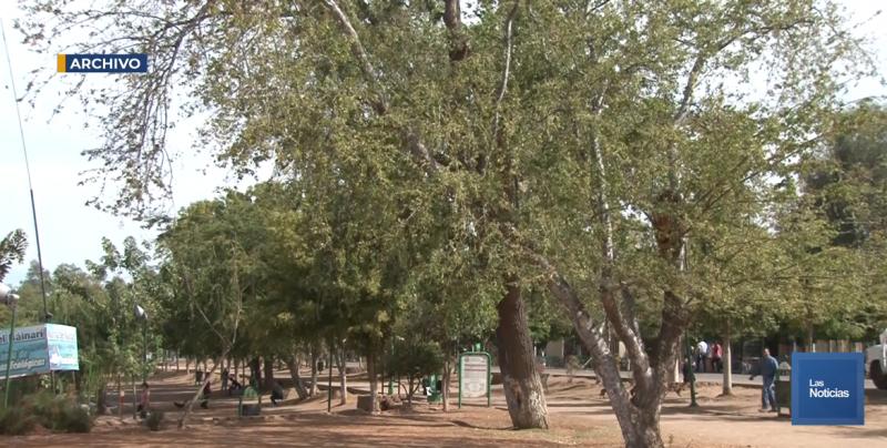 Buscan regularizar a los coqueros de la Laguna del Náinari y que paguen renta