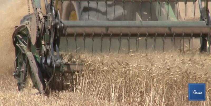 Productores agrícolas siguen preocupados por no recibir el pago de coberturas
