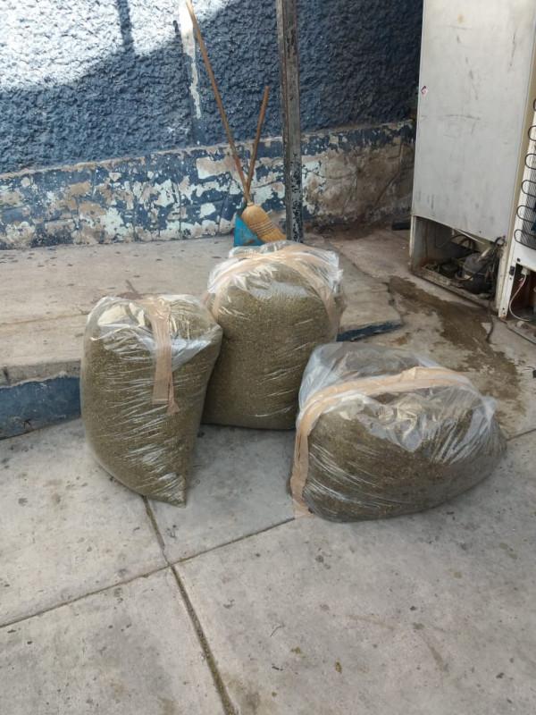 Decomisa Seguridad Pública 77 Kilogramos de Mariguana