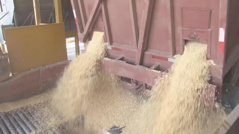 En riesgo el pago del Ingreso Objetivo para la producción de maíz de Sinaloa