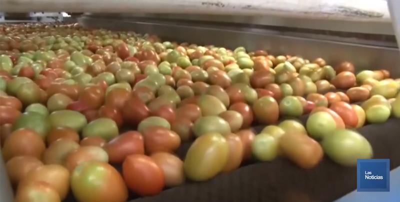 Celebran productores de tomate acuerdo con Estados Unidos