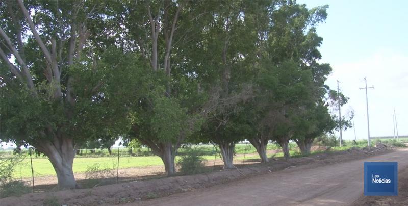 Resultados positivos ha logrado la Fundación Ambiental del Valle del Yaqui