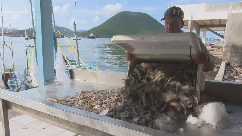 Muy tardía la fecha para el levantamiento de la veda para el  camarón en Sinaloa