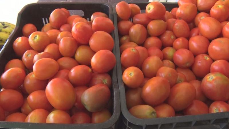 Obligados los productores de tomate mexicano en aceptar condiciones que impuso Estados Unidos